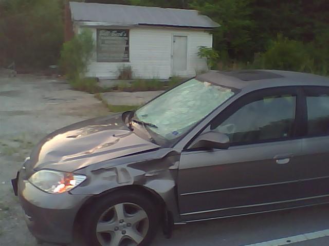 Vehicle vs Deer